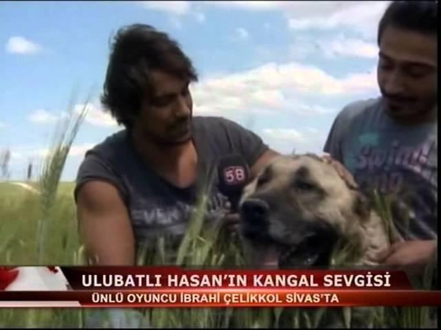 İBRAHİM ÇELİKKOL Kangal Köpeği
