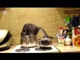 Ох уж эти кошки (хорошее настроение, юмор, смешное видео, кот, котенок, котята, кошки, звери, домашнее животное, хищник, кухня).