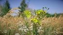 4K UHD Природа цветок поле пение птиц музыка релакс красивое видео медитация