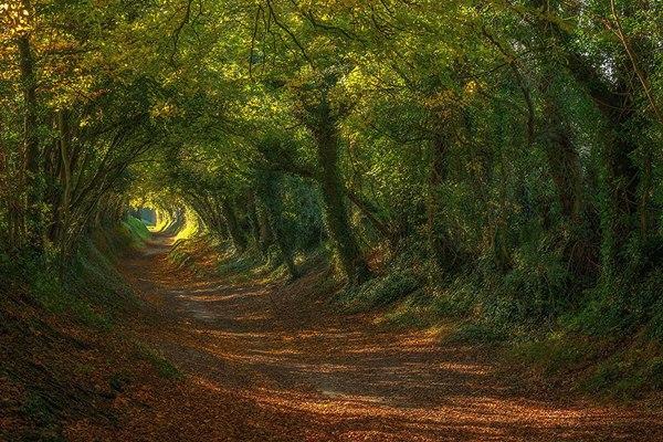 Путь к деревенской мельнице, Сассекс, Великобритания