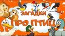 ПТИЦЫ 🐦 Загадки детям про птиц России 🇷🇺 Угадай птицу 🦉 Мультик про птиц для малышей с ответами
