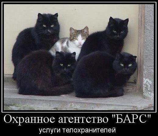http://cs14111.vk.me/c540100/v540100368/2aac/QyUjJQzVuWI.jpg