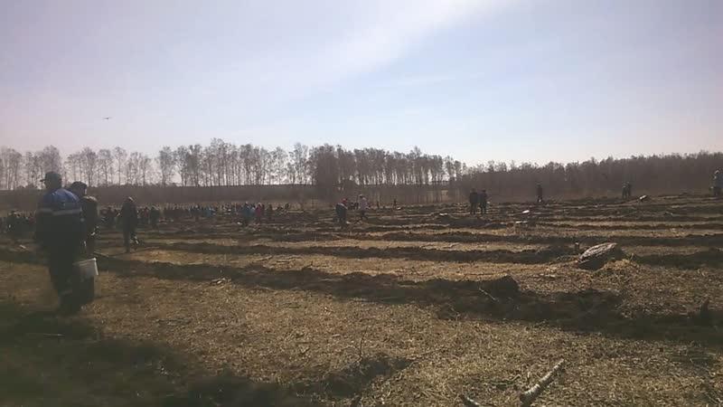 Акция Посади дерево-подари жизнь!Бижбулякский район