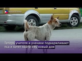 Тоскующая по умершему хозяину собака неделями ждала его у работы