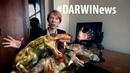 DARWINews 7 3 3 Найдены окаменелые останки горыныча и ночницы