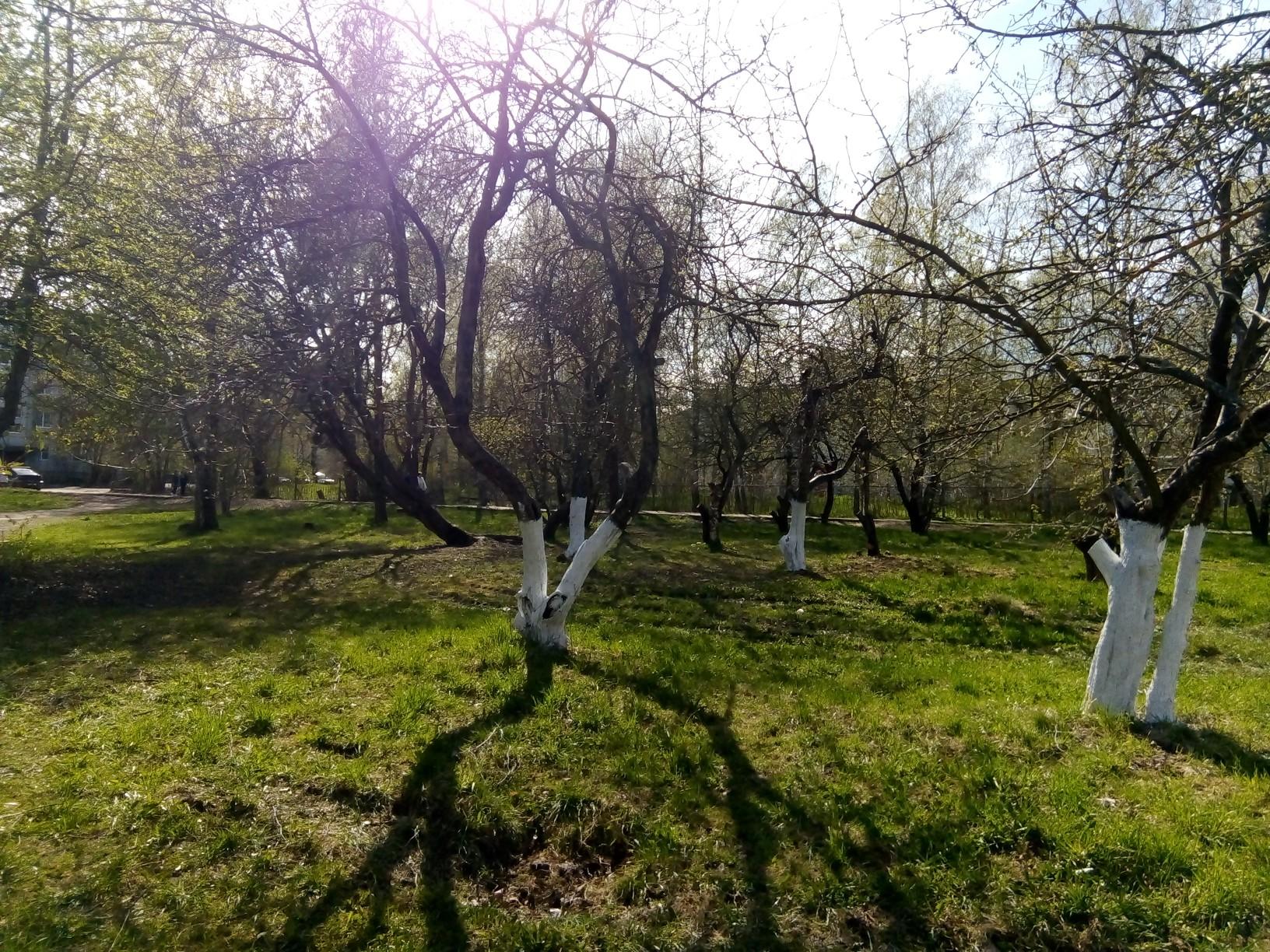 Субботник в Яблоневом саду