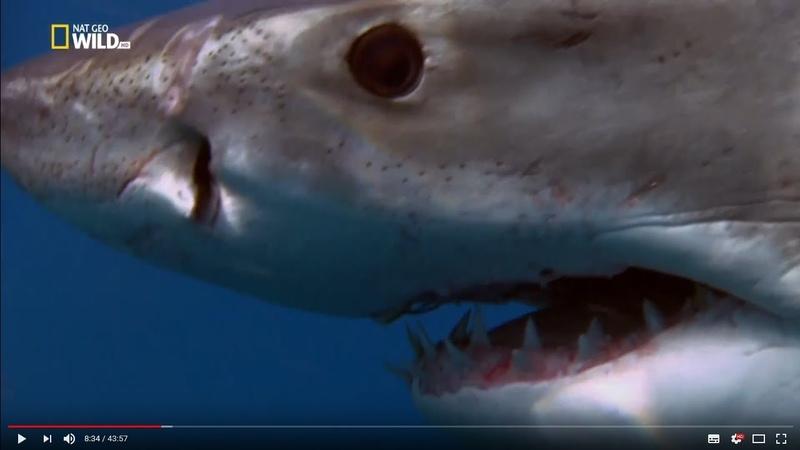 Самые опасные животные Безумные акулы Full HD 1080i