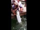 Ловля рыбы на собственную руку