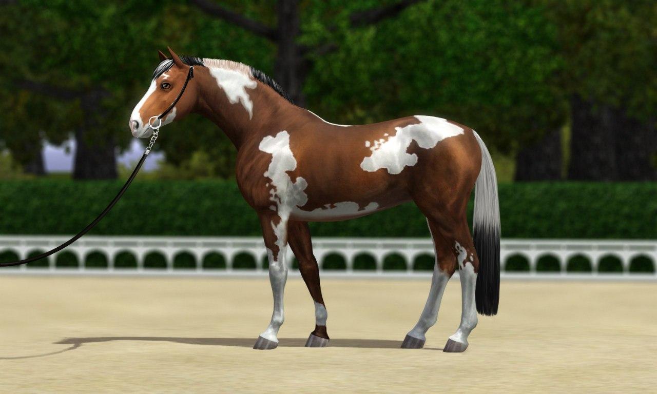 Регистрация лошадей в RHF 1.1 - Страница 39 5qWNUFwhlNA