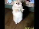 Собака танцевака.mp4