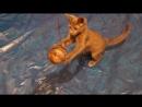 кошка играть с кукла ,Котенка играет