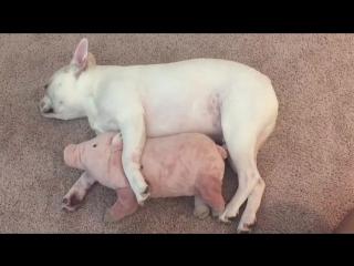 Свинка пеппа и щенок спят на полу. Пепа свинка смешная игрушка. Живая собака