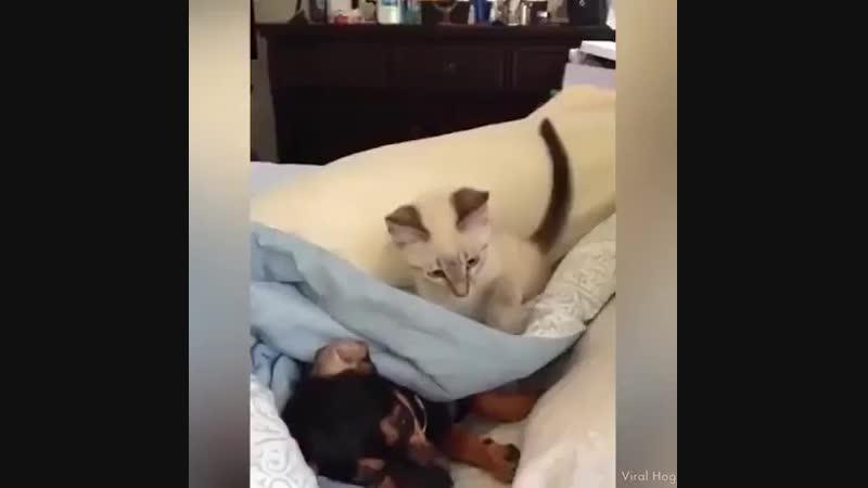 Когда мужик валяется на диване,