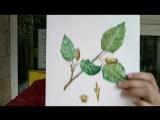 Сходила на мастер-класс по акварельной ботанической иллюстрации