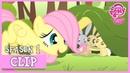 Fluttershy's Cutie Mark Story The Cutie Mark Chronicles MLP FiM HD