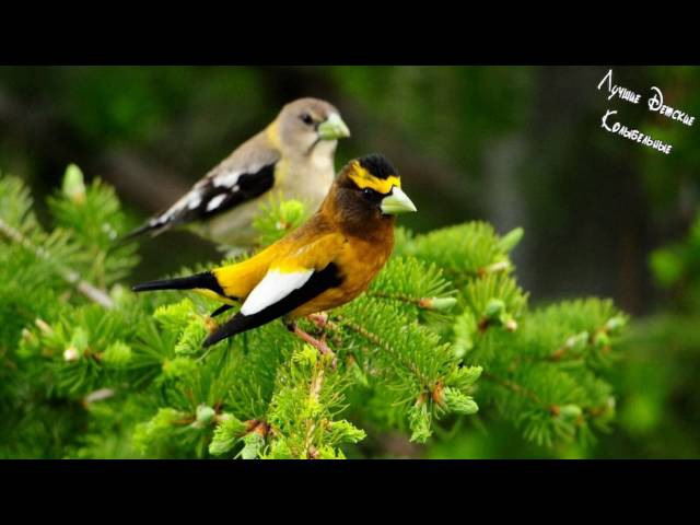 Колыбельная для Малышей - Нежное Фортепиано и Пение Лесных Птиц