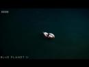 Eel Suffers Toxic Shock From Brine Pool - Blue Planet II