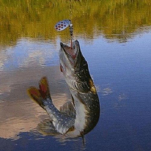 что ловили на реке москва