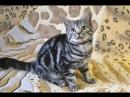 🔥Продажа🔥Шотландский прямоухий котик окрас черный мрамор на серебре
