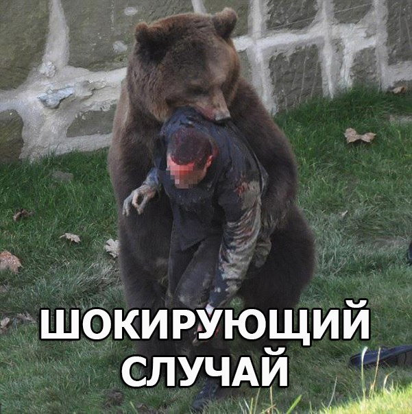 Мужчина на спор прыгнул в вольер к медведям