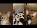 Рыжий кот Найн, первый день дома