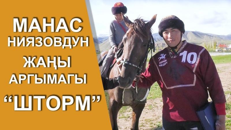 """Манас Ниязовдун жаңы аргымагы """"ШТОРМ"""" Бойка кайда?"""