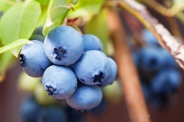 Эта вкусная ягода способна лечить сердце