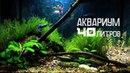 Оформление аквариума 40 литров для гуппи мхами корягами камнями и растениями