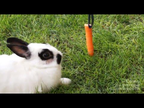 Кролики - лишний вес у кролика. Как с ним бороться?