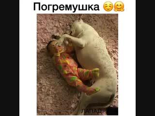 А псу все равно, лежит как поросёнок и ухом не ведёт!