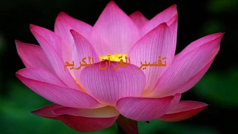 تفسير القرآن الكريم سورة القلم الحلقة الر 15