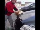 Это Кубань. Ебалай моет котом машину. Каких только мудаков на земле нет
