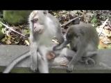 Прикол) обезьянки)) секс не порно)