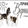 """Приют для бездомных животных """"Верный"""" г.Кемерово"""