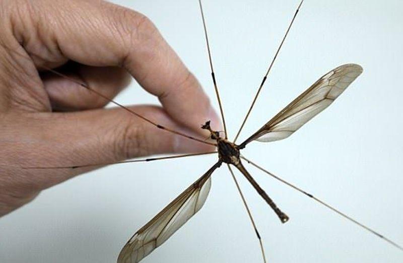 Как избавиться от комаров в квартире народными средствами