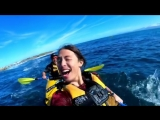 У берегов Новой Зеландии тюлень врезал осьминогом по лицу плывущего в лодке человека.