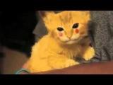 ▶! Котёнок Пикачу Смешно! РЖАКА !! YouTube 360p