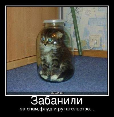 Виктор Волохин, 13 апреля 1991, Тула, id132348843