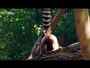 Nat Geo Wild: Самые странные в мире: Запреты мира животных. Секс по дружбе (2013) HDTV 1080i