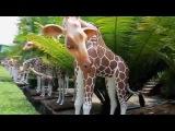 Nong Nooch Tropical Garden. Pattaya. Thailand | Тропический сад Нонг Нуч.