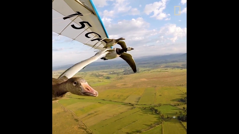 Weather permitting, pilot Christian Moullec soars with birds on an almost daily basis—and you can join him.