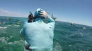Shark Attack to the Head (GoPro video after pic)