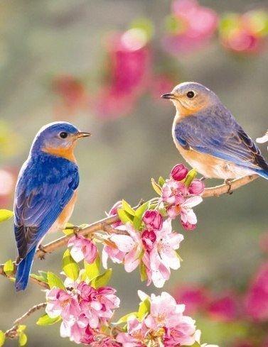 """Весенний """"Мир красоты"""""""