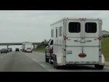 США. Быки на колесах. Как американцы перевозят животных.
