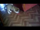 Maximus против игрушки. Враг не пройдет.