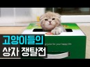 고양이들의 상자 쟁탈전 Cats Play with a Box SuriNoel-EP44