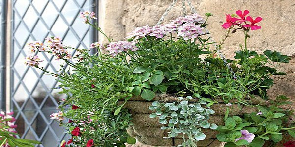 ОДНОЛЕТНИКИ В ПОДВЕСНЫХ КОРЗИНКАХ: ВЫБОР КОРЗИНЫ, ПОЧВА, УХОД, ПОДБОР РАСТЕНИЙ Каждый любитель цветов, путешествующий летом по Европе, любуется подвесными цветочными корзинами, украшающими сады.