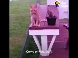 Котики очеловечиваются