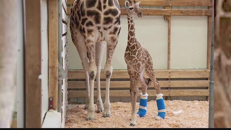 Giraffe Therapeutic Shoes