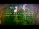 ЗЕЛЁНЫЙ НАЛЁТ В ГОРШКЕ ОРХИДЕИ/ ПРИЧИНЫ ВОЗНИКНОВЕНИЯ И СПОСОБЫ БОРЬБЫ!(Green potted orchids bloom )
